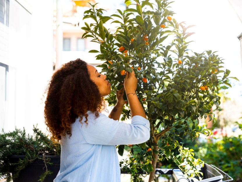 Come coltivare gli agrumi sul balcone