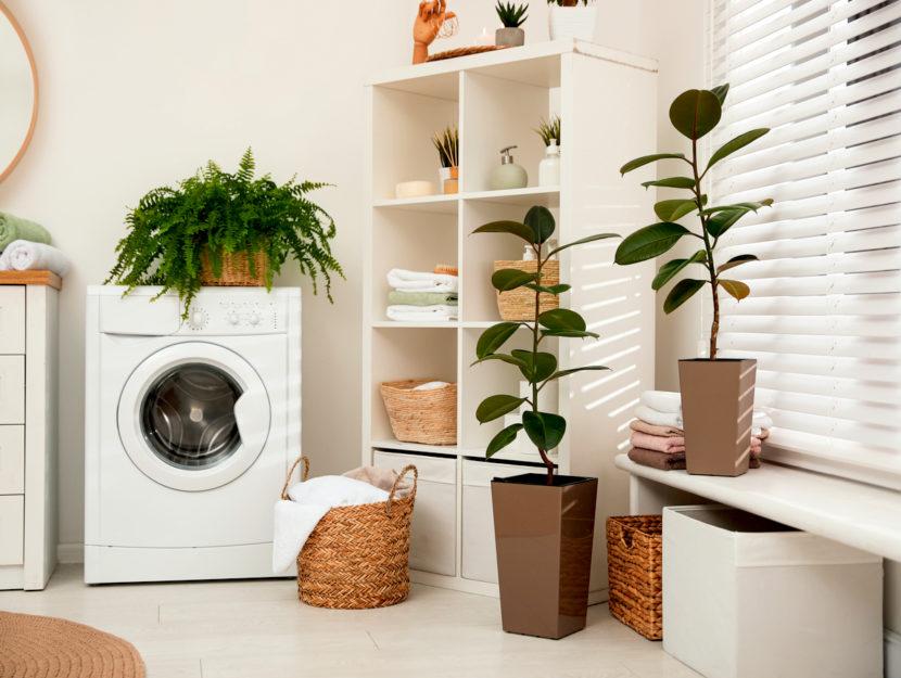 igienizzare e mantenere pulita la lavatrice