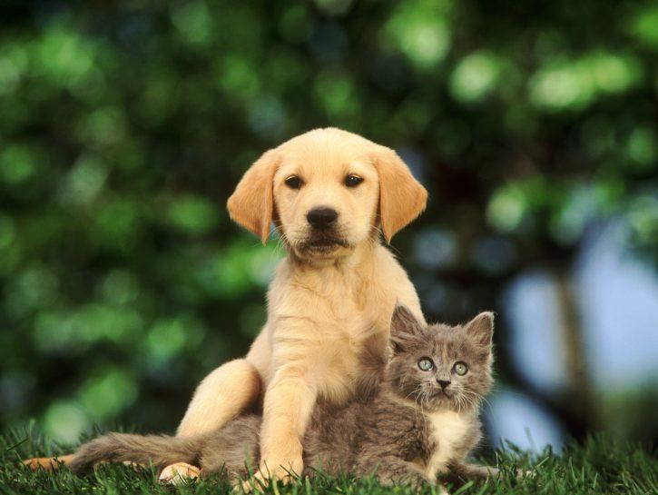 Открытки с животными и с надписями со смыслом
