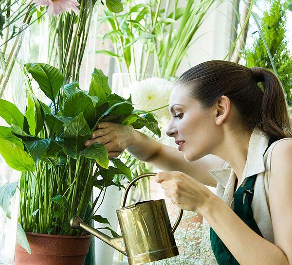 Annaffiare le piante quando sei in vacanza