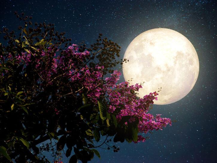 piante e fasi lunari