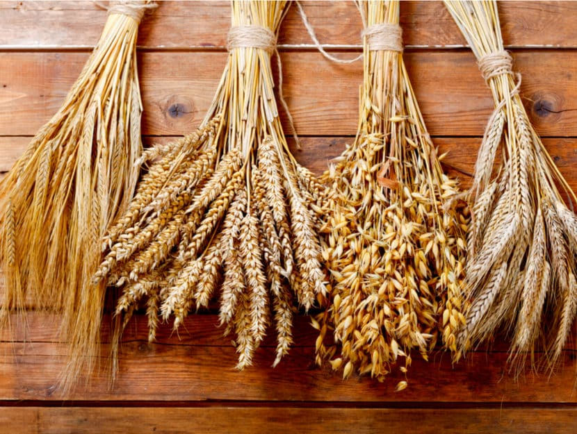 Elenco completo di cereali