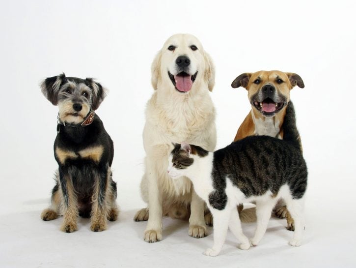 Oroscopo pets
