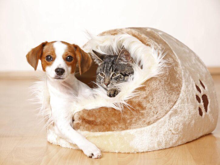Cane gatto cuccia peluche casa parquet