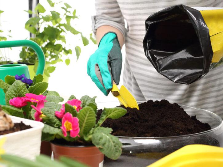 terriccio piante