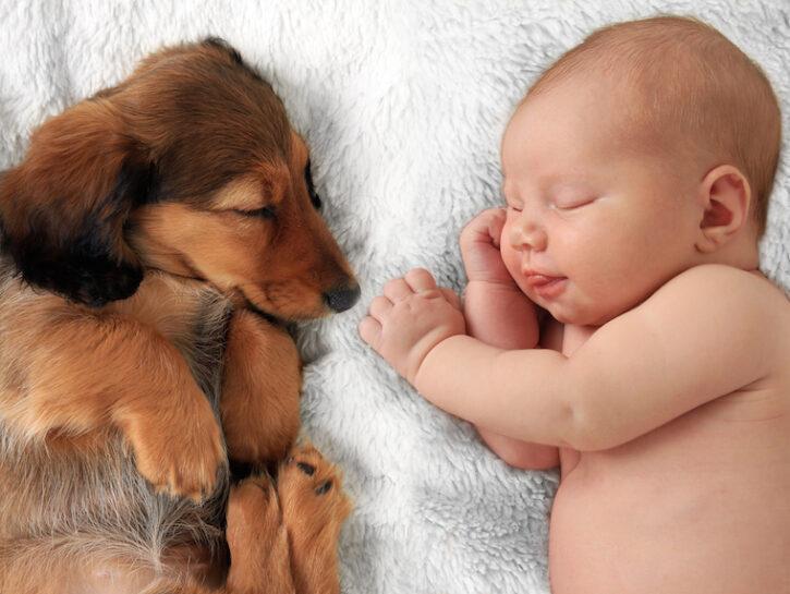 Cane e bebé: le regole d'oro