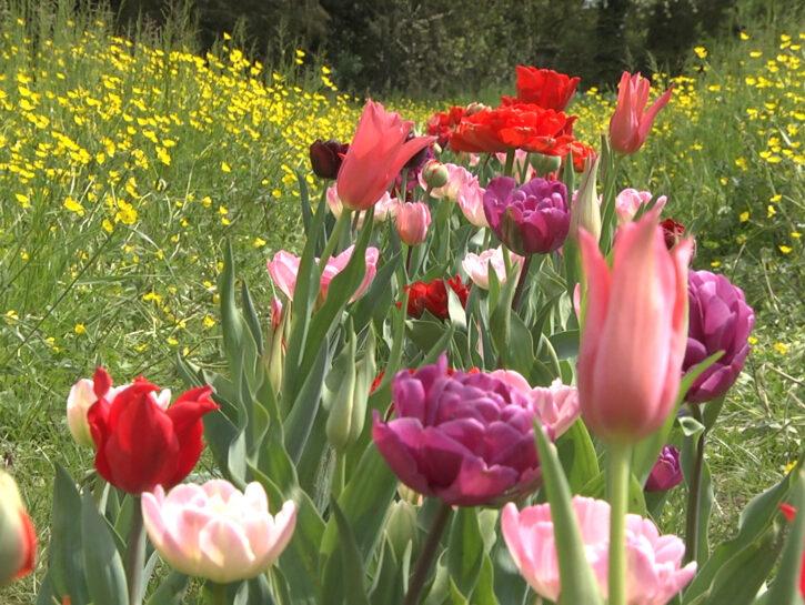 I Bulbi di Evelina - Giardinity