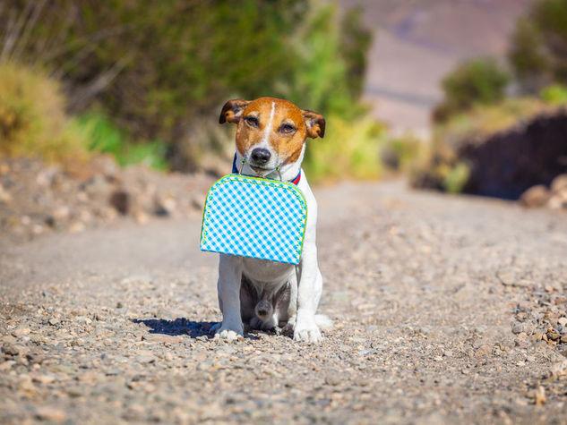 cane abbandonato in vacanza con te