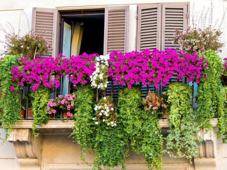 Fiori per il terrazzo