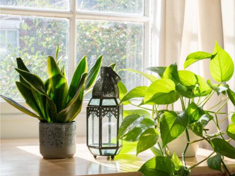 A settembre crea il tuo angolo verde con queste piante da appartamento
