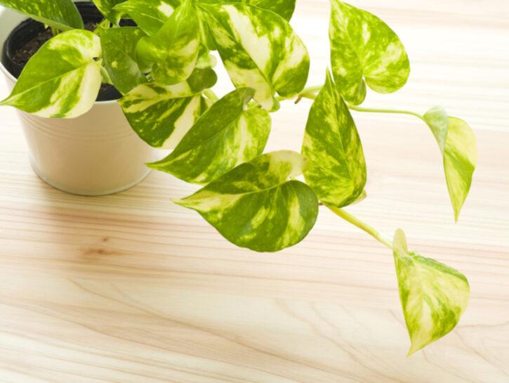 Le piante da tenere in camera per favorire il sonno