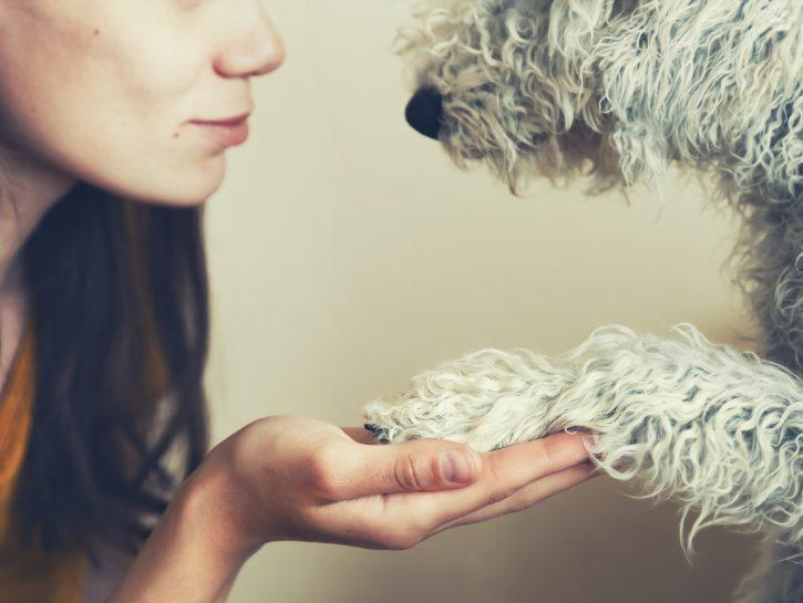 Empatia dei cani