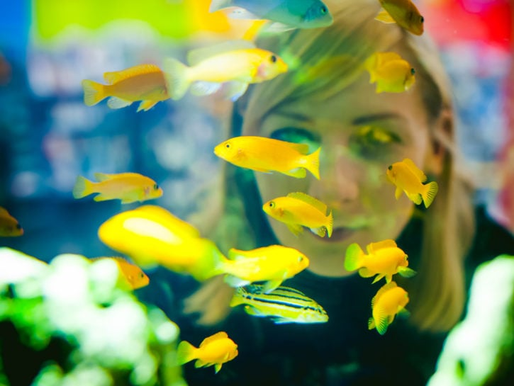 Donna acquario pesci gialli