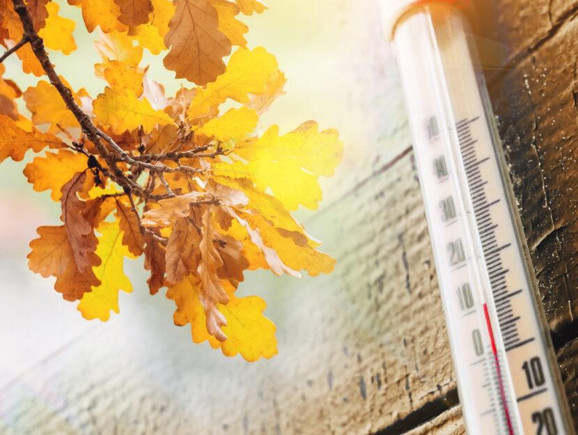 Autunno ramo foglie termometro