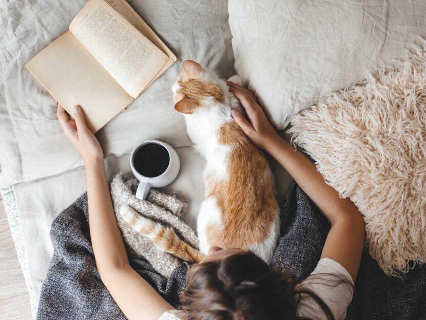 regali amanti dei gatti