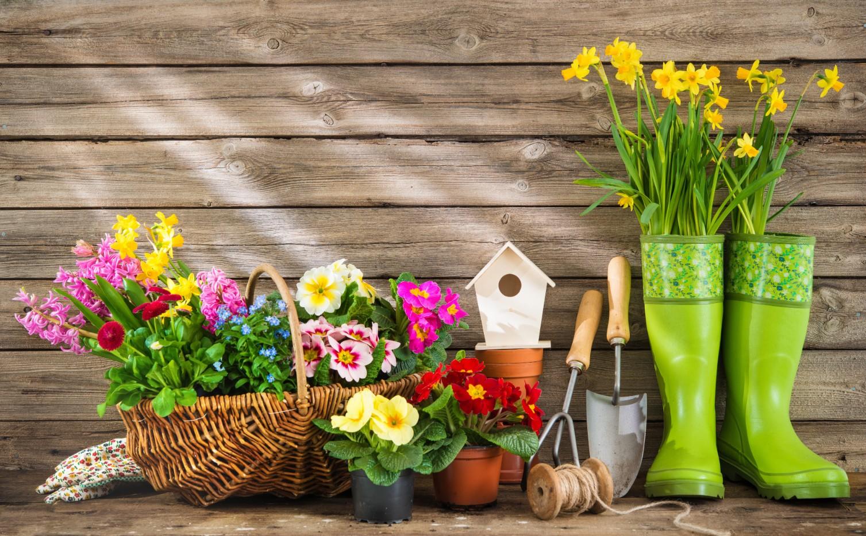 Quali Bulbi Piantare In Primavera fiori primaverili   quali fiori piantare in primavera