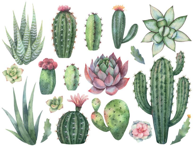 piante grasse più comuni