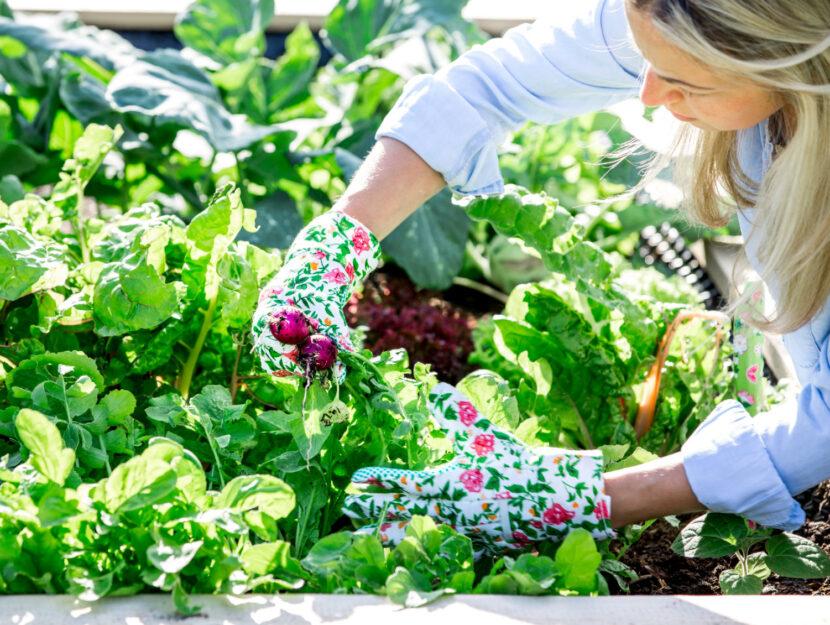 ortaggi da seminare in estate