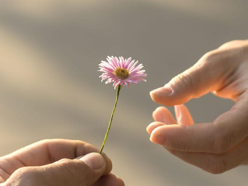 praticare bonta fiore