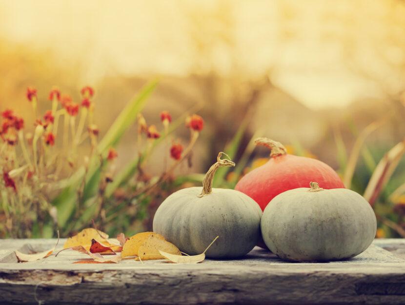 autunno 2019