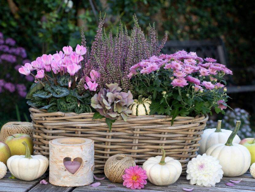 piante fiorite di settembre