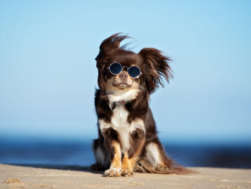 cane adatto a te