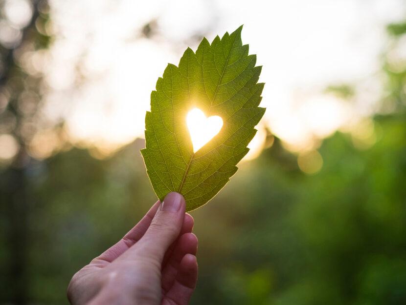 Foglia con cuore: San Velentino ecosostenibile