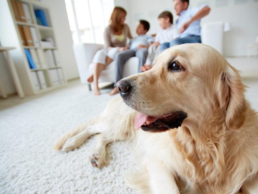 Cane tappeto famiglia divano casa