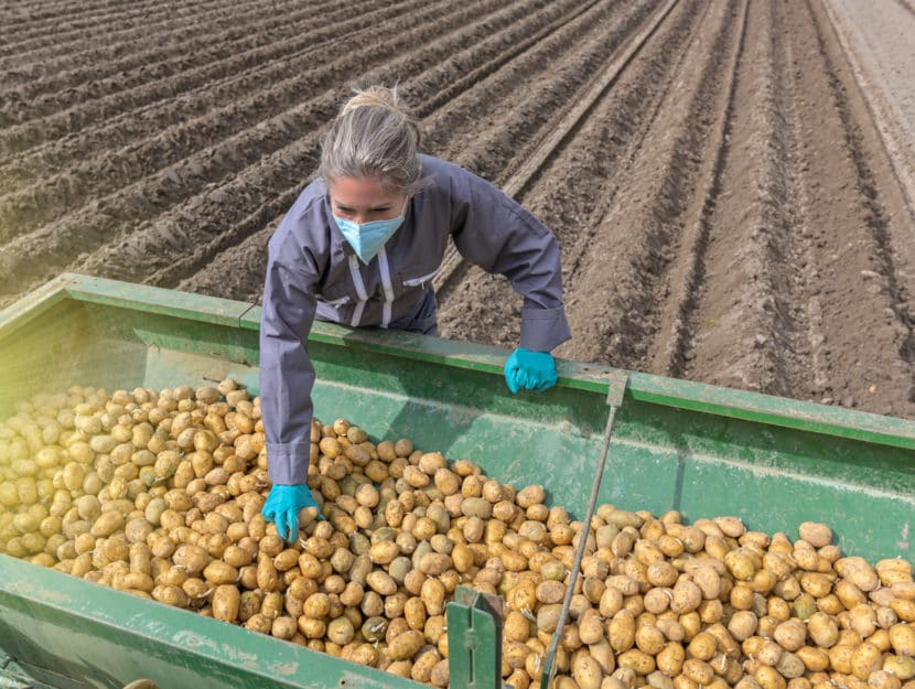 Agricoltura donna patate camion