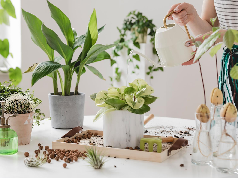 Piante Eleganti Da Appartamento migliori piante da regalare