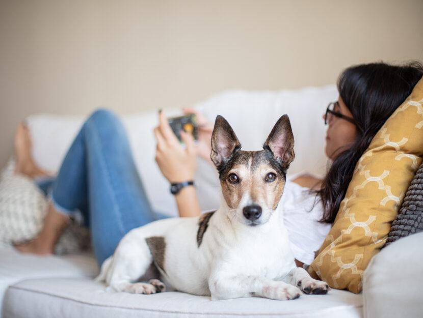 Cosa capiscono i cani degli umani