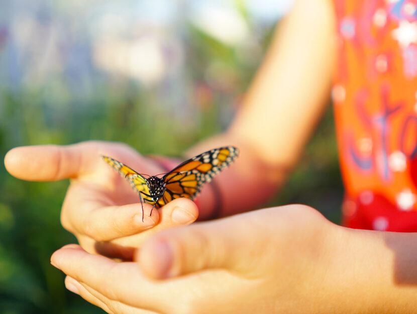 Metamorfosi: cambiare per diventare farfalla
