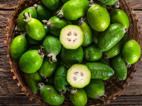 Feijoa: un piccolo frutto esotico dalle grandi proprietà