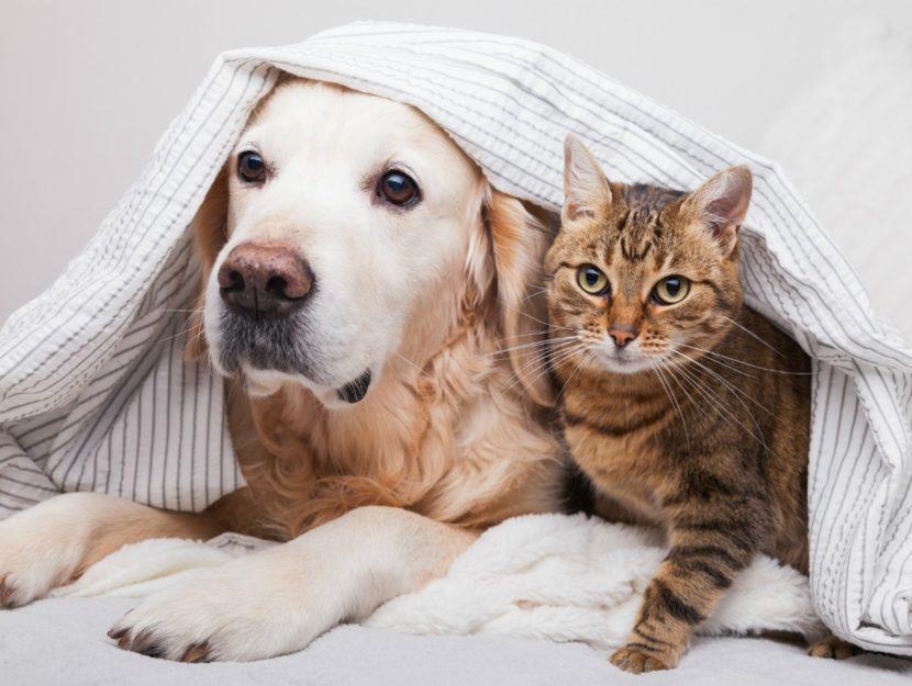convivenza-con-animali