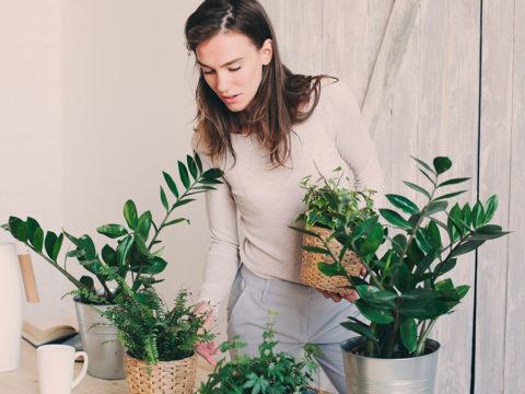 Piante in casa: il verde negli ambienti domestici per favorire l'armonia
