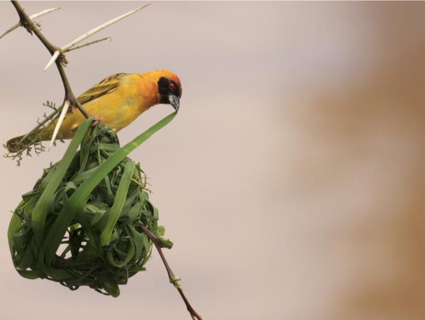 Uccellini e nido