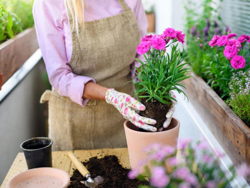 Piantare fiori sul balcone in primavera