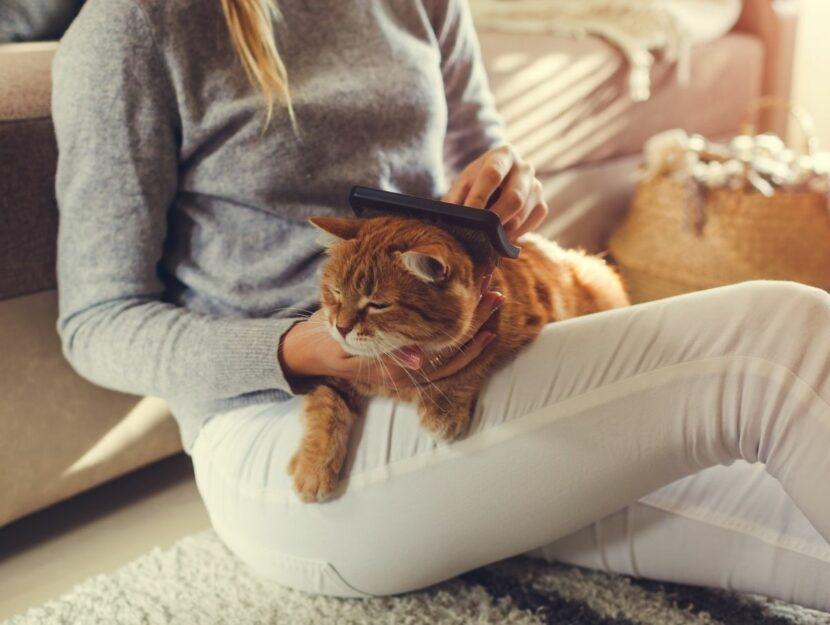 donna sul divano con gatto, pulire casa con animali