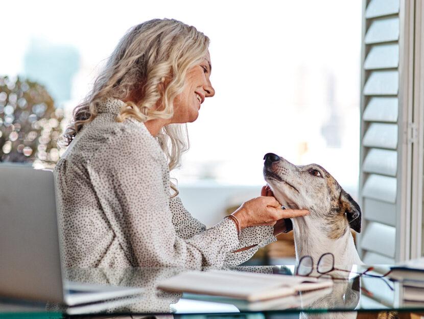 Donna cane casa computer