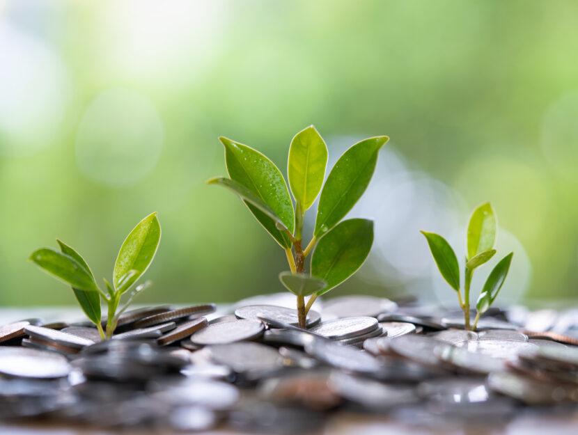 Soldi green monete piante