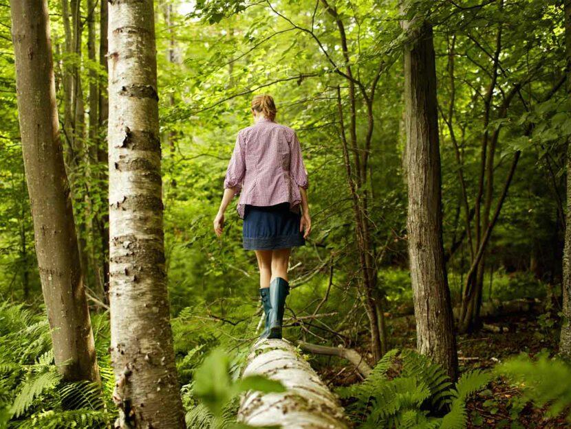 esperienze da fare nei boschi