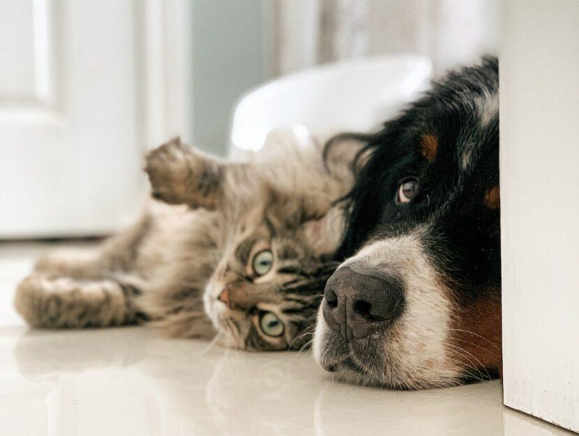 Far convivere cane e gatto