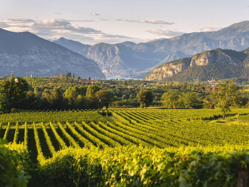 Franciacorta vigna Brescia Italia