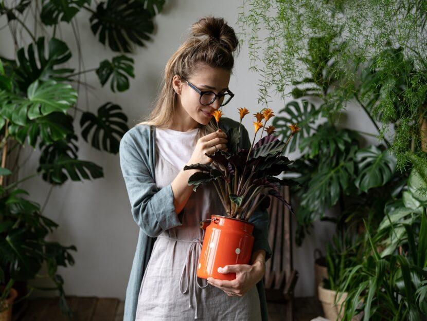 Segni zodiacali e piante