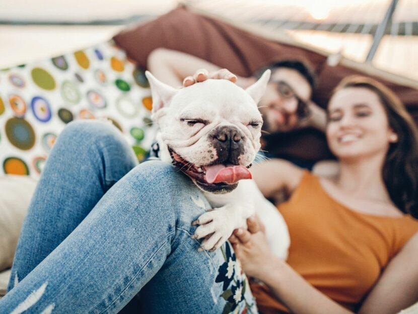 cane felice insieme ai padroni