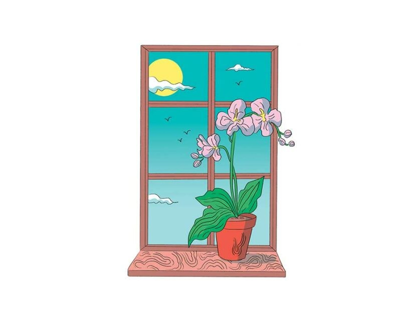 Illustrazione Elisa Macellari Orchidea