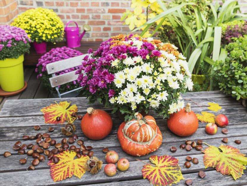 Fiori zucca balcone autunno